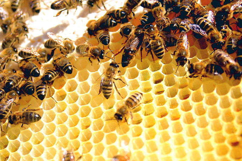 """The Importance of Prostaglandins, or """"Worker Bees"""""""