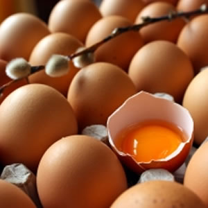 Eggs, Lecithin, Choline & TMAO